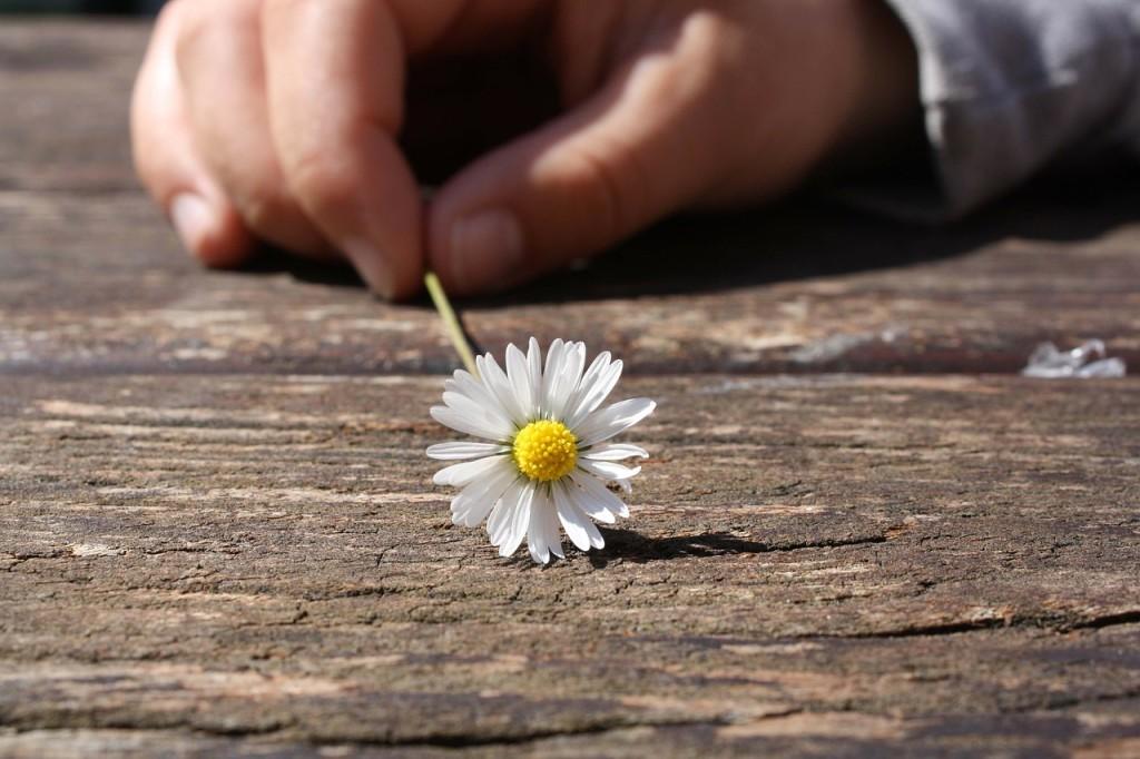 daisy-hand
