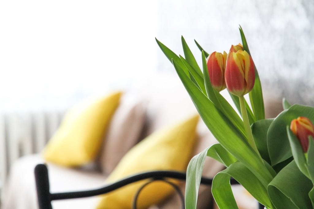 tulip_room